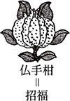 三多紋-仏手柑 | 銀山上の畑焼